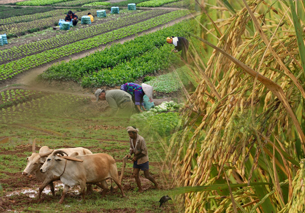 Monsoon ends this week, stage set for record agriculture