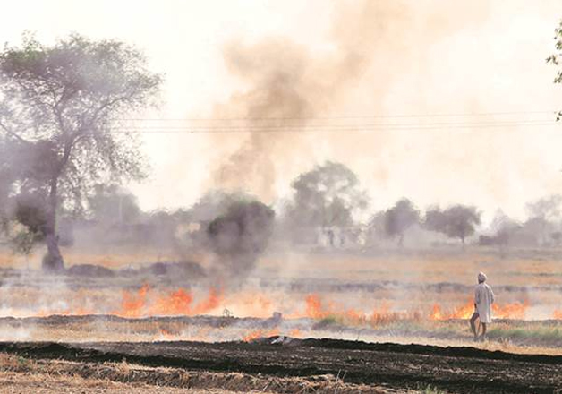 File pic - Burning of paddy stubbles have already begun