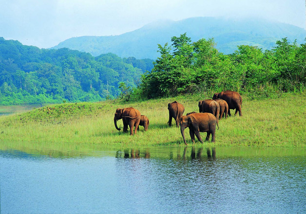 Half of India's wildlife may soon be wiped out: Report