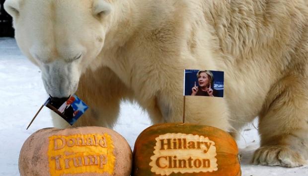 India Tv - Polar Bear Felix Predicts Donald Trump will win the US presidential election.