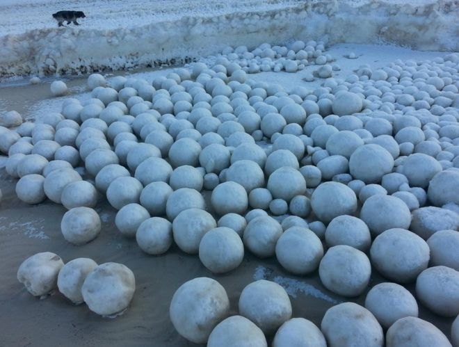 Strange giant snowballs appear on beach In Siberia