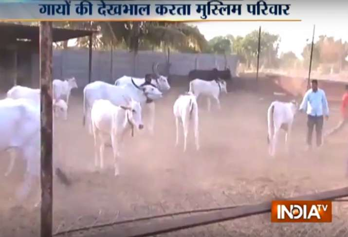 A Muslim family in Pune has been running a cow shelter for