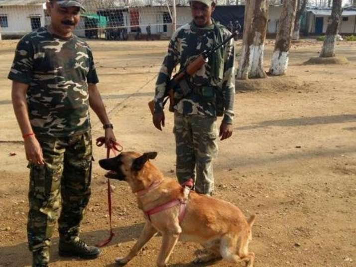 India Tv - CRPF sniffer dog 'Cracker' dies in Maoist triggered IED blast