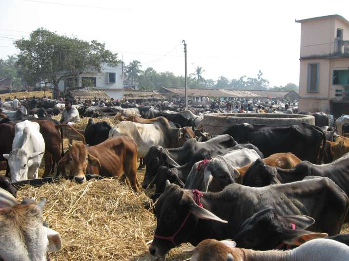 Centre bans sale, purchase of cattle from animal markets