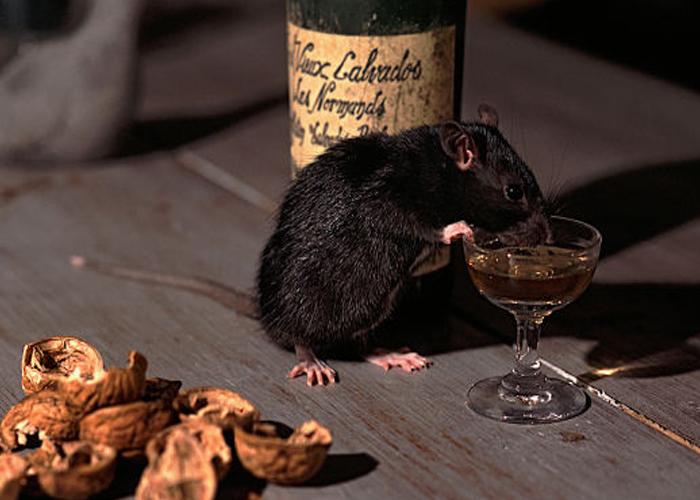 Rats drank Alcohol, insists Bihar Police