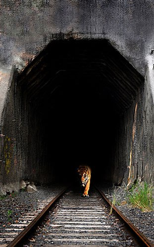India Tv - The tiger in the tunnel by ruskin bond