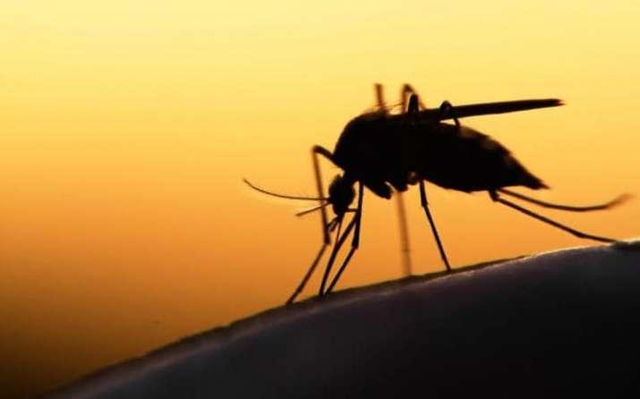 India Tv - aedes mosquito
