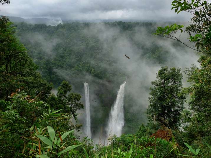 India Tv - Amazon Rainforest