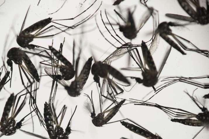 India Tv - Precautions for Zika