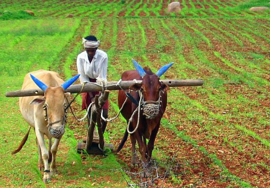 Karnataka waives crop loans up to Rs 50,000 for state's