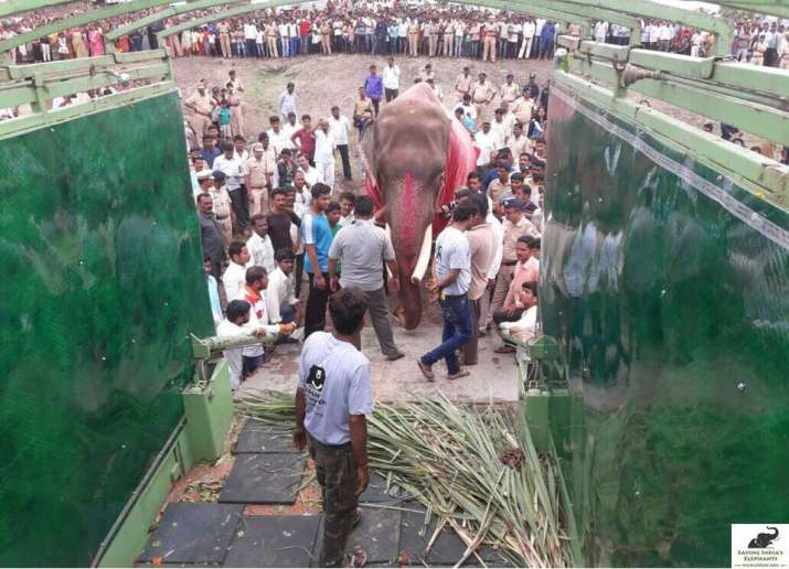 India Tv - 'Gajraj' was moved to Elephant Conservation and Care Center
