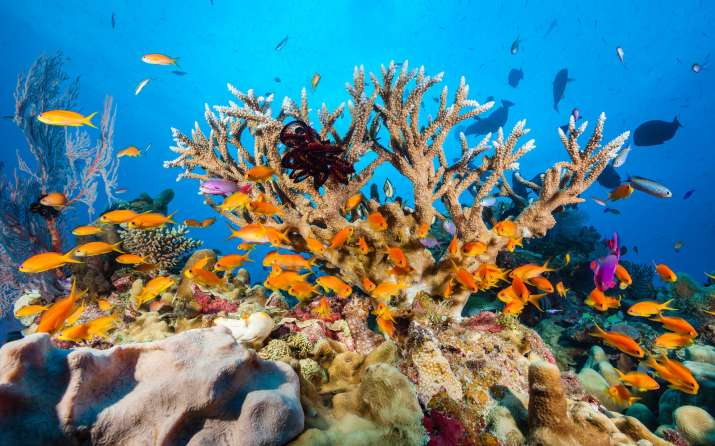 India Tv - the great barrier reef