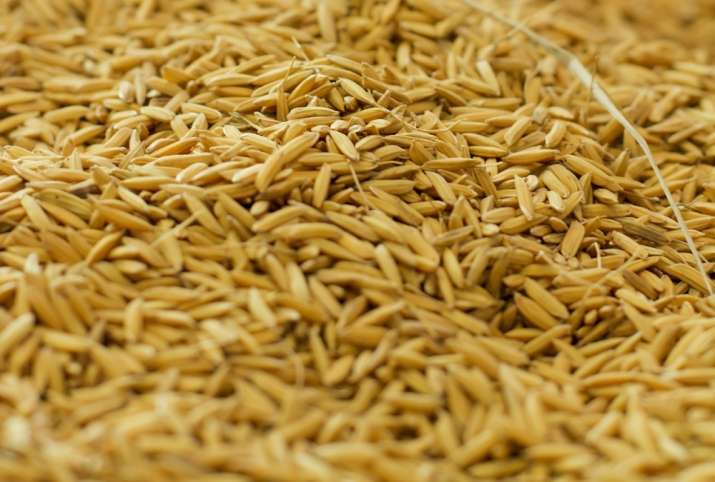 India Tv - one serving of rice bran can help fulfil daily requirement