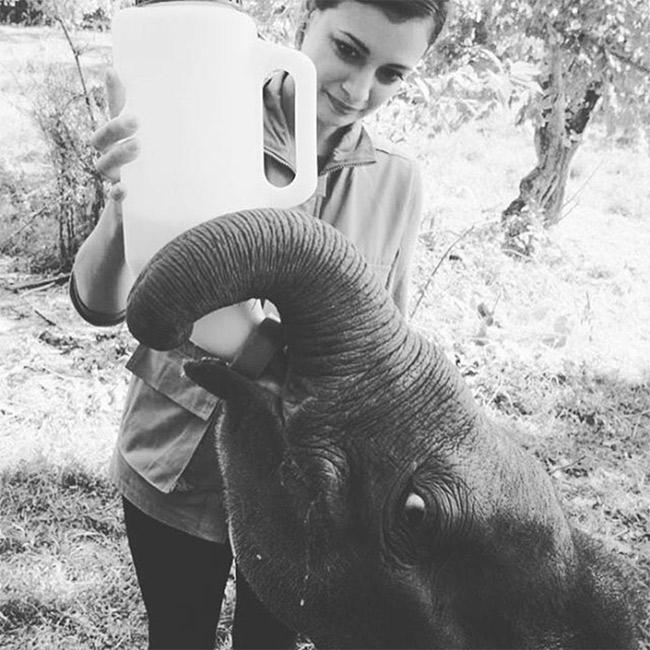 India Tv - Gaj Yatra will aim at supporting India's elephant