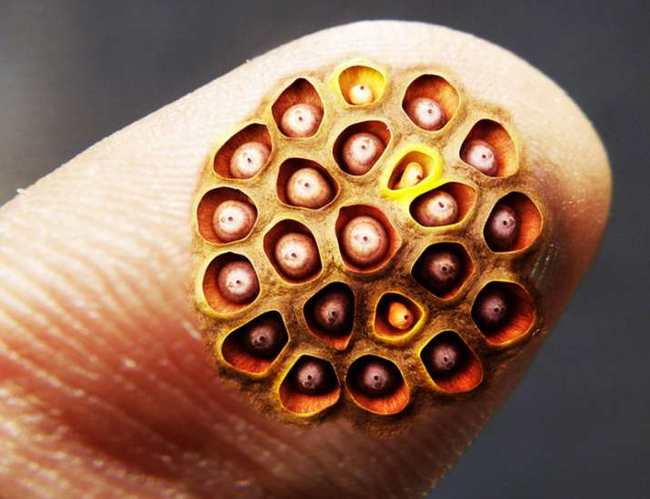 6 Amazing Facts About Trypophobia Fear Of Small Holes Or Bumps