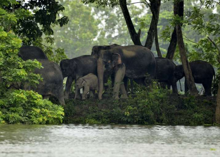Assam floods: 225 animals dead in Kaziranga