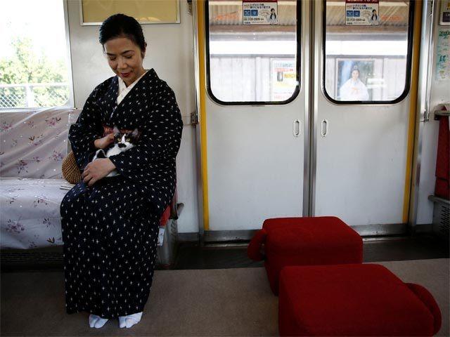 India Tv - Cat Cafe Train, japan, india