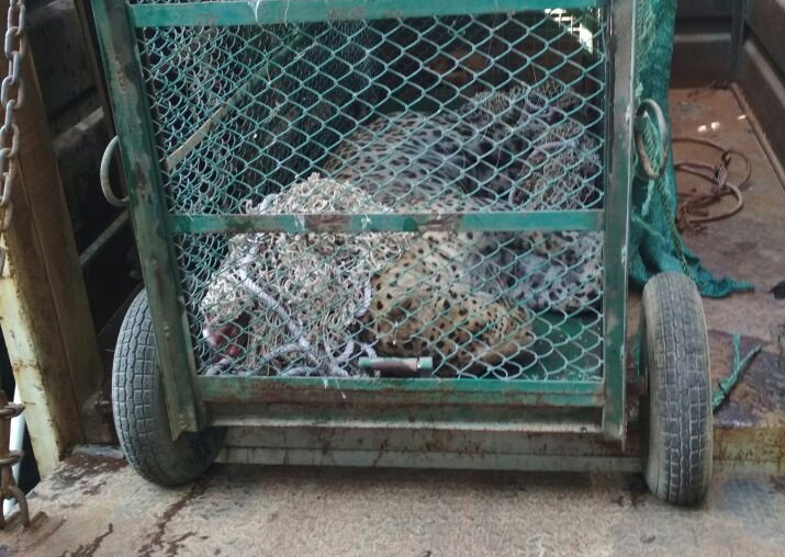 Leopard that entered Maruti Suzuki plant in Gurugram