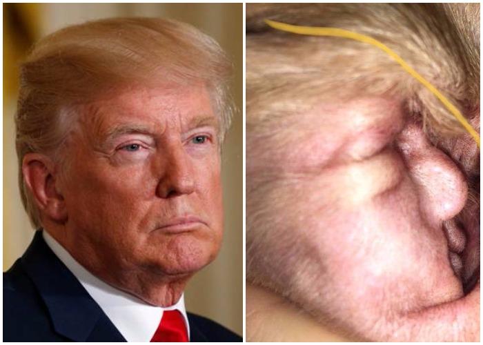 Donald Trump In Dog Ear
