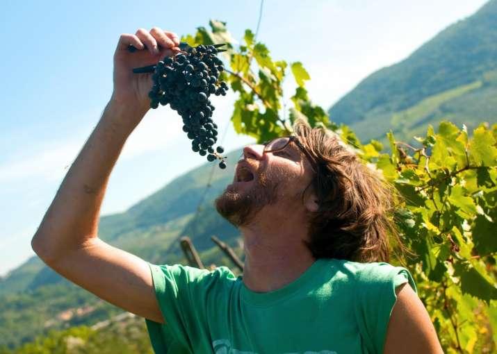 Humans began eating grapes 22,000 years ago