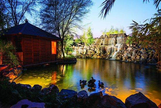 India Tv - The Tree House Resort