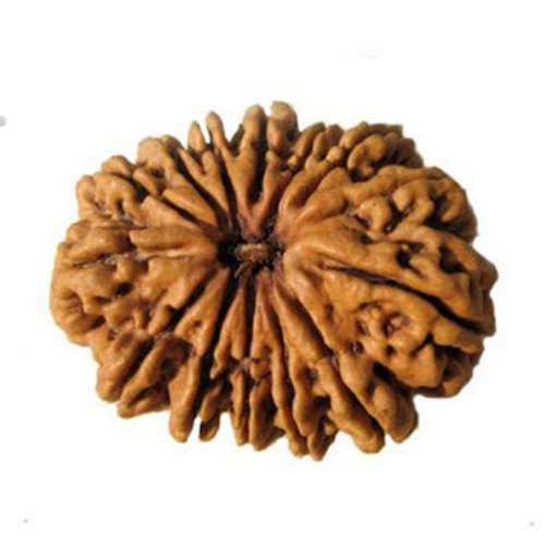 India Tv - Rudraksha beads