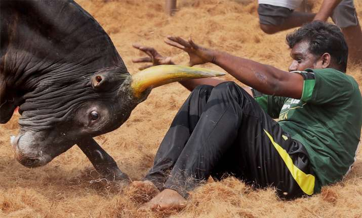 Tamil Nadu grants permission to hold Jallikattu event with certain restrictions, check SOPs