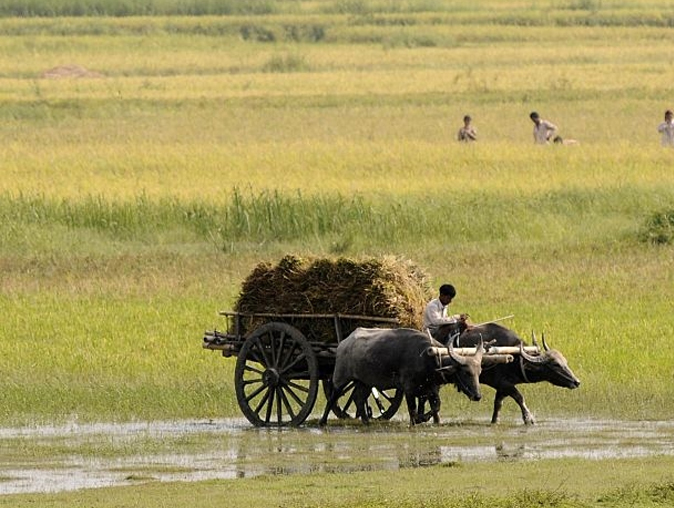 India Tv - Representational pic - Union Budget 2018: Why so much distress in agriculture sector and what's on agenda