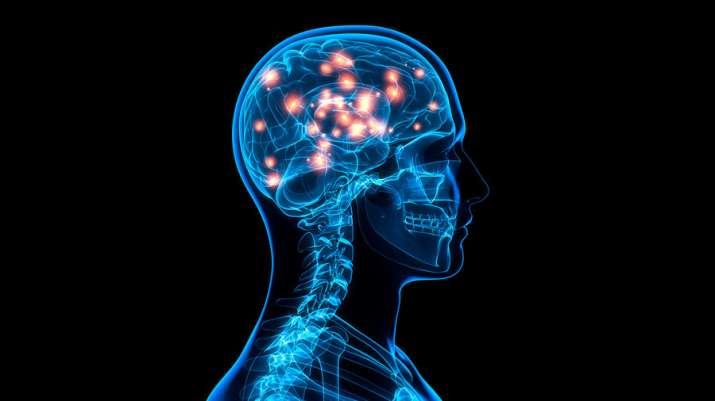 memory, brain