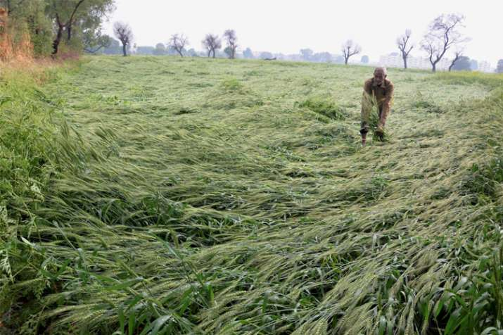 Maha govt announces Rs 200 cr aid for hailstorm-hit