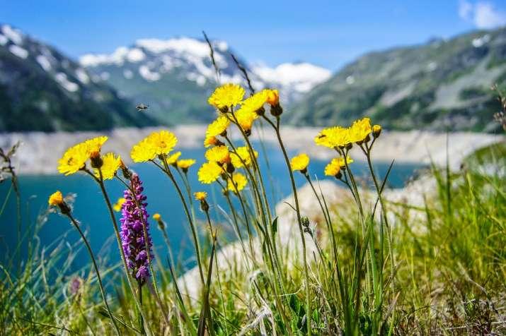 Origin of flowering plants