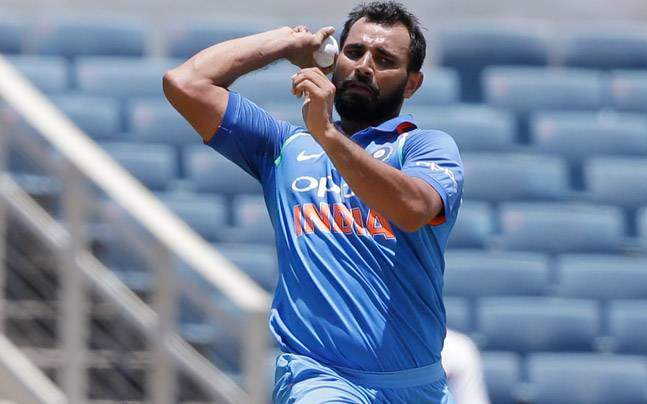 Image result for shami