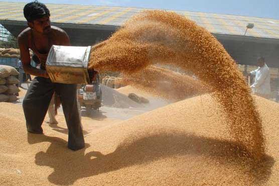 Rains destroy wheat crop in Punjab, Haryana as farmers