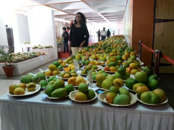India Tv - Mango mania in Goa: Local variety takes over the Alphonso