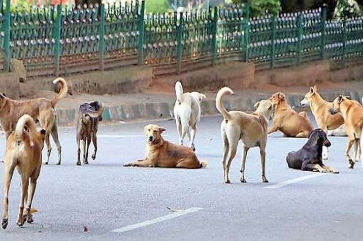 The death toll in canine atatcks in the Sitapur district