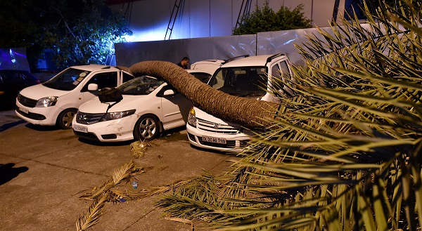 India Tv - A palm tree trunk fell on cars during dust storm in New Delhi, on Sunday.
