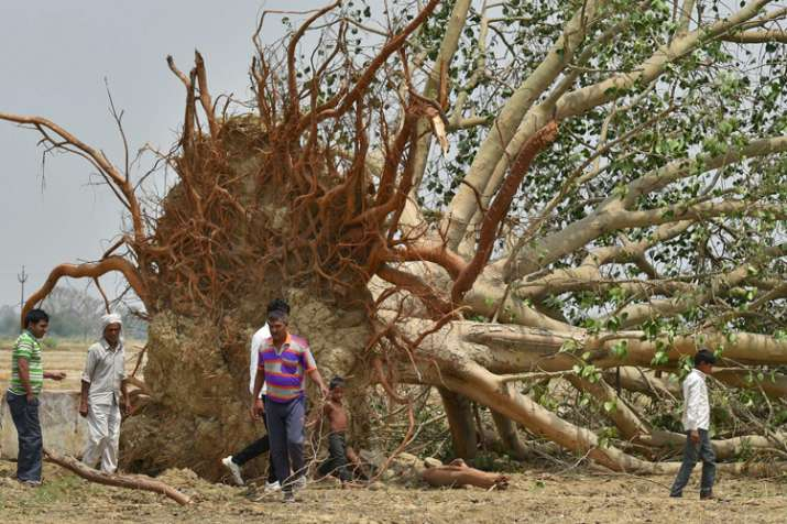 Villagers near a peepal tree, uprooted in Wednesday's
