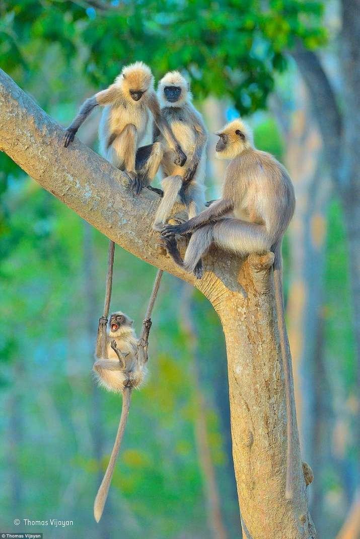 India Tv - Amazing wildlife Safaris in India