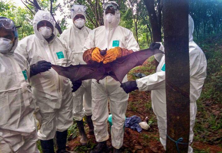 Nipah virus has claimed the lives of 17 people so far