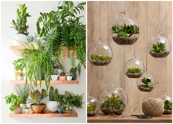 Decorate Your Home With Indoor Plants 5 Easy Home Decor Ideas - Home-decorate-ideas