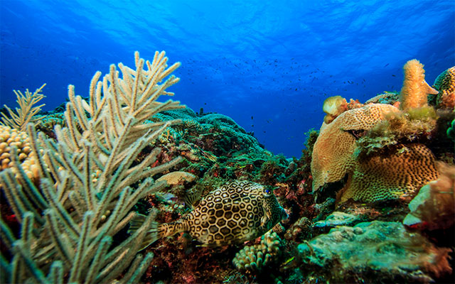 Research says changing temperature may affect corals