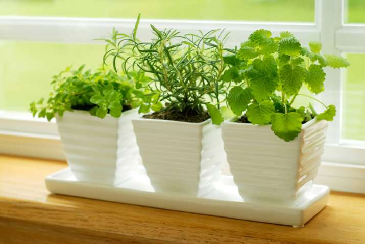 Lifestyle tips to attract positive vibes, 4 kinds of plants you should buy for happy homes