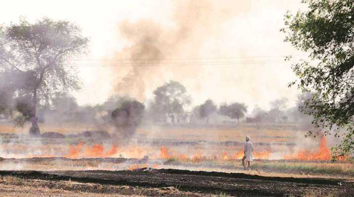 India Tv - The report, which analyses the impact of pollutant PM2.5, showed that the highest contribution since October 11 by stubble burning was seen on Friday at 36 per cent.