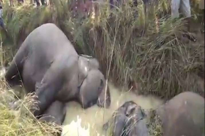 Seven elephants electrocuted in Odisha's Dhenkanal, govt