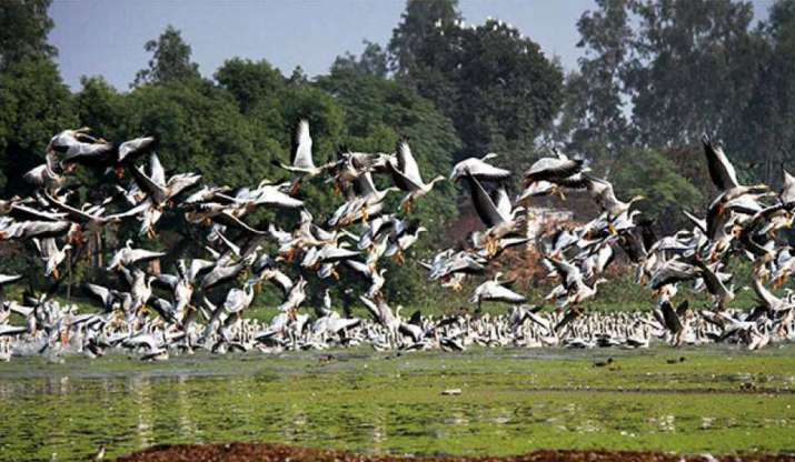 Jammu: Migratory birds throng Gharana wetland (File photo)