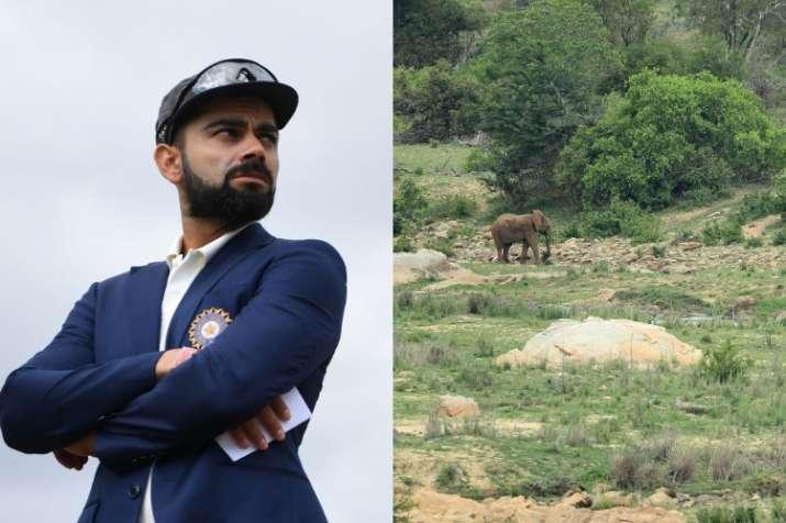 Animal lover Virat Kohli pens open letter to relocate Elephant No.44 from Jaipur