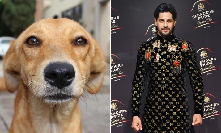 dog gatecrashed sidharth malhotra fashion show
