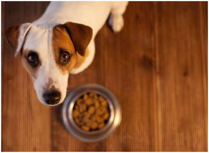 High levels of bacteria found in raw meat dog foods; Know more