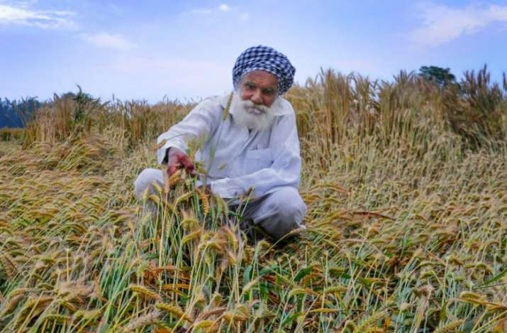 India Tv - A farmer inspects his wheat crop damaged by strong winds and rains, on the outskirts of Amritsar on Tuesday.