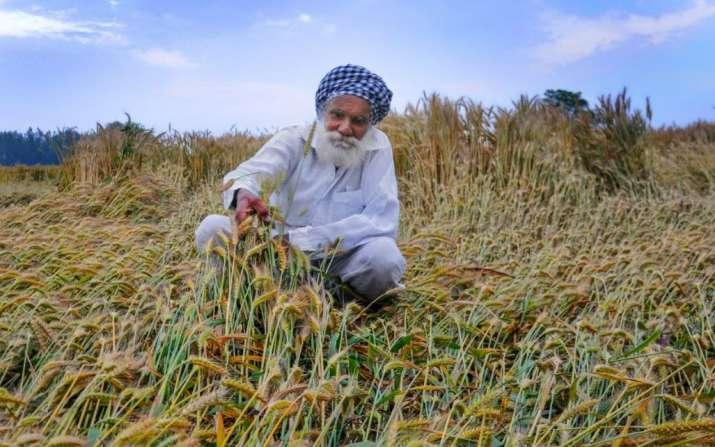 farmer distress, rabi crop, rains, thunderstorm,